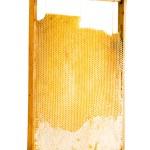 Sweet honey in honeycomb — Stock Photo #7064096
