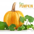 Yellow pumpkin vegetable with green leaves — Stock Photo #7183868