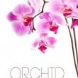 Orchid flowers on branch — Stock Photo #7254573