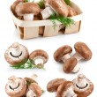 Set fresh mushroom champignons with twig dill — Stok fotoğraf