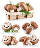 Conjunto de champiñones champiñones frescos con eneldo ramita — Foto de Stock