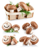 Set fresh mushroom champignons with twig dill — Stock fotografie