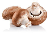 Fresh mushroom champignon — Stock Photo