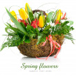 Basket of yellow tulip flowers — Stock Photo