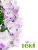 Spring pink flowers — Стоковое фото