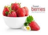 Strawberry berry with green leaf and flower — Foto de Stock