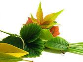 дерби осень цветов флора — Стоковое фото