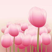 Rosy Tulips — Stock Vector