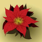 Red Poinsettia — Stock Vector