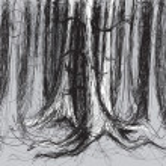 bosque de abedul — Vector de stock