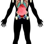 Постер, плакат: Internal Organs