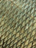 Fish scale background — Stock Photo