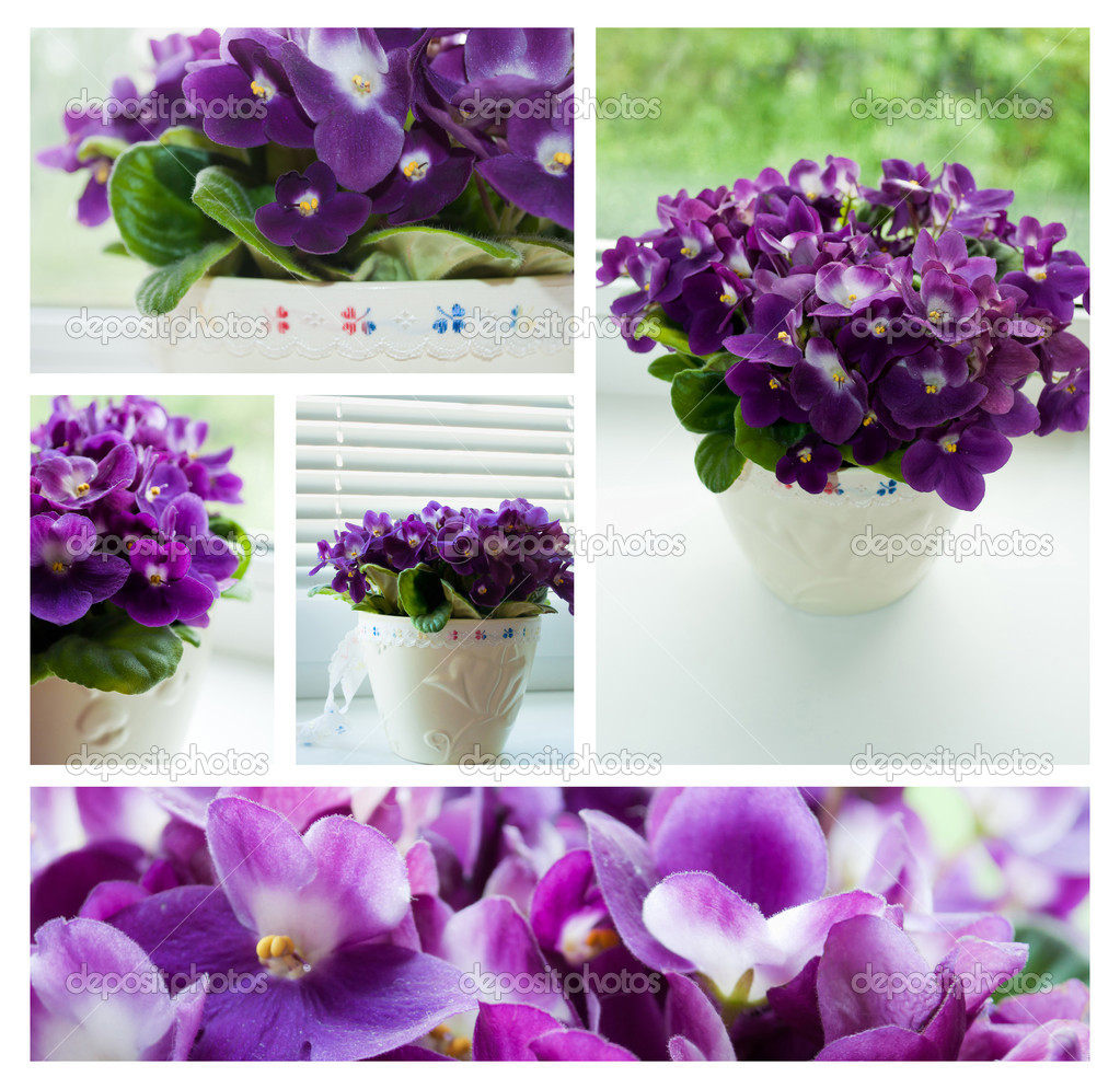 Five photos of purple violet flowers. — Stock Photo #7494505