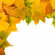 Angular frame of maple leaves — Stock Photo