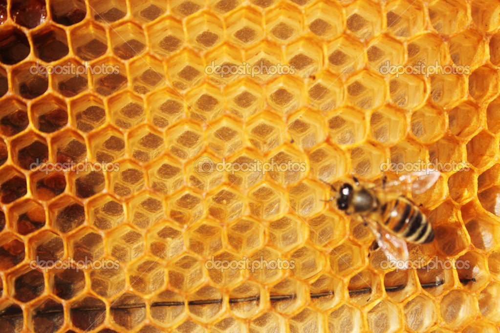 Honey comb and a bee working — Stock Photo #7005881
