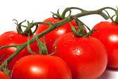 Tomate branche closeup — Photo