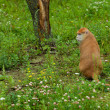Monkey sitting on the grass at the zoo — ストック写真