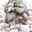 Turtle reptile — Stock Photo