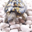 Turtle reptile — Stock Photo #6910132
