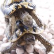 Turtle reptile — Stock Photo #6910151