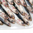 Fresh anchovies — Stock Photo