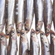 Fresh anchovies - Stock Photo