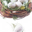 Quail eggs in hay - Stockfoto