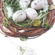 Quail eggs in hay — Stock Photo