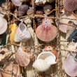 Sea shells on fishing net - Stock Photo