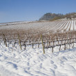 Vineyards covered in snow - Foto Stock