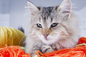 Cute cat — Stock Photo