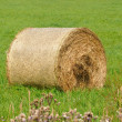 Straw bales — Stock Photo #6890384