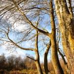 Old trees — Stock Photo #7381248