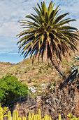 Cactus et palmier. — Photo