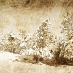 Snowy winter — Stock Photo