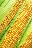Mazorca de maíz — Foto de Stock