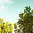 Stock Photo: Green leave on blue sky