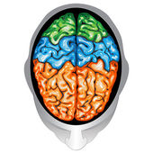 Human brain top view — Stock Vector