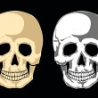 Human skull on black - Stock Vector