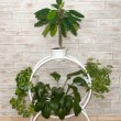 Stand with plants as an element of interior - Stock Photo