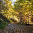 Path leading through the autumn forest — Stock Photo #7601743