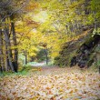 Path leading through the autumn forest — Stock Photo