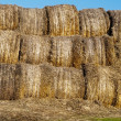 Many hay rolls — Stock Photo