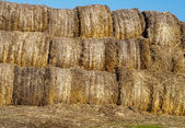 Many hay rolls — Photo