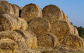 Many hay rolls — Foto Stock