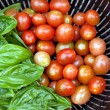 Vine Ripened Grape Tomatoes and Italian Basil - Stock fotografie