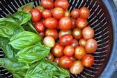 Vine Ripened Grape Tomatoes and Italian Basil — Stock Photo