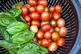 Vine Ripened Grape Tomatoes and Italian Basil — Photo