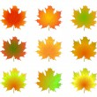 Maple autumn leaves isolated - Stock Vector