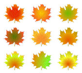 Maple autumn leaves isolated — Stock Vector